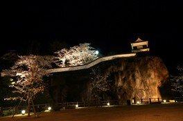 臼杵城址の桜 画像(3/4)
