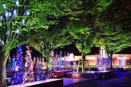 西山公園イルミネーション「光でつなぐ家族の絆」画像(2/3)