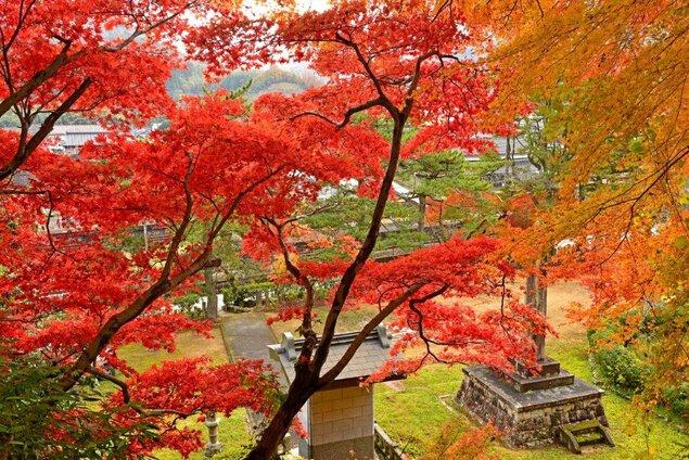 竹田寺町通りの紅葉
