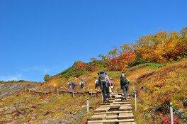 自然研究路は木道や階段が整備されている