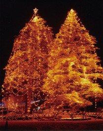 阿東地域交流センター地福では高さ20mを超える2本のモミの木に電飾した巨大ツリーがお目見え