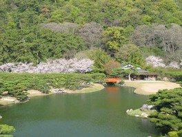 特別名勝 栗林公園の桜 画像(3/5)