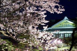 特別名勝 栗林公園の桜 画像(5/5)