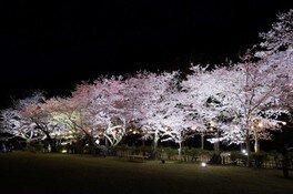 特別名勝 栗林公園の桜 画像(4/5)