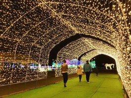 小岩井ウィンターイルミネーション 銀河農場の夜 画像(3/5)