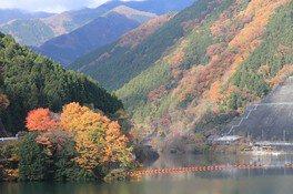 名栗湖 有間渓谷の紅葉 画像(2/3)