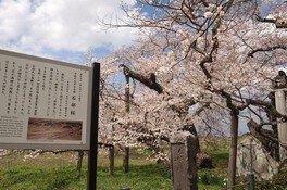 石部桜 画像(2/3)