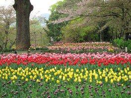 公渕森林公園の桜 画像(4/5)