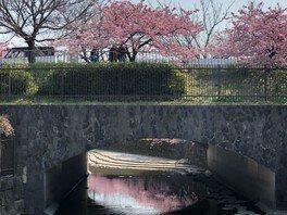 水面に映り込む桜なども楽しめる