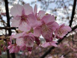 可憐なピンク色の花が目を楽しませる
