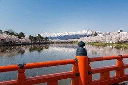 高田城址公園の桜 画像(2/5)
