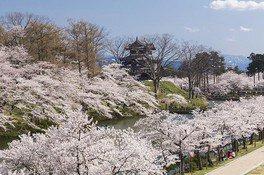 高田城址公園の桜 画像(4/5)
