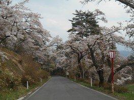 室根山 蟻塚公園の桜 画像(5/5)