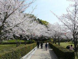 丸亀城の桜 画像(3/5)