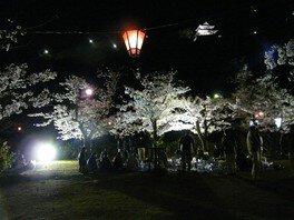 丸亀城の桜 画像(4/5)