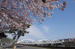 県立琴弾公園の桜 画像(2/5)